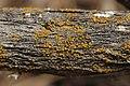 Lichen (41089931300).jpg