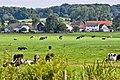 Limburgse weilanden.jpg