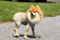 Liondog.png