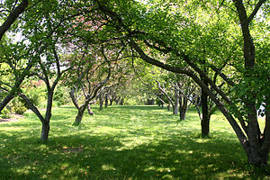 University of Maine - A tree-lined path through the Lyle E. Littlefield Ornamental Gardens