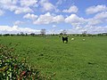 Livestock field - geograph.org.uk - 438652.jpg