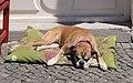 Ljubljana - dog.jpg