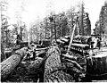 Loading a ten-foot fir log on railroad car using a ginpole, Washington, 1907 (KINSEY 2813).jpeg