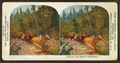 Logging in the state of Washington, by American Stereoscopic Company.png