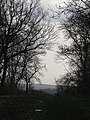 Looking out of Aversely Wood - December 2015 - panoramio.jpg
