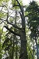 MOs810, WG 2014 20, OChK Las Miejski (Rozdrazewski Quercus) (4).JPG