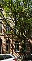 Maastricht - Herbenusstraat 144 GM-1420 20190420.jpg