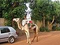 Man on camel behind a car in Burkina Faso, 2008.jpg