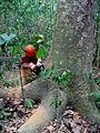 Manejo florestal Amazônia.jpg