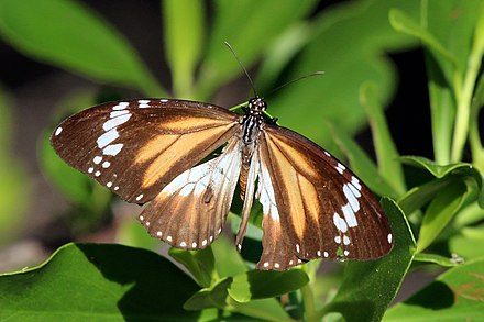 Bribie Island Butterfly House Opening Hours