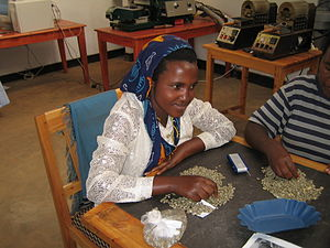 Maraba coffee - Maraba beans are sorted by hand, according to quality