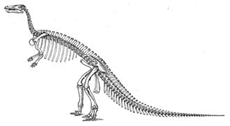 Camptosaurus - Historical skeletal restoration by O.C. Marsh, with skull based on remains now referred to Theiophytalia