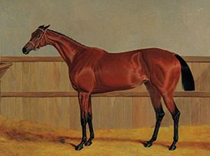 Matilda (horse) - Matilda, a bay racehorse with her groom in a loosebox (detail) by John Frederick Herring, Sr.