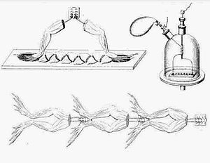 Frog battery - Matteucci's frog battery, 1845 (top left); Aldini's frog battery, 1818 (bottom); apparatus for controlled exposure of gases to frog battery (top right).