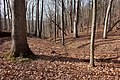 McCormick's Creek State Park - Flickr - aspidoscelis (2).jpg