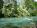 McKenzie River, Western Oregon.jpg