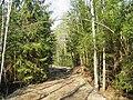 Meža ceļš - panoramio (4).jpg