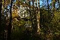 Mercer Slough Environmental Educational Center 02.jpg