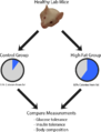 Methodology of a study on diet induced obesity in mice.png
