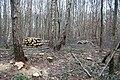 Micheldever wood, Hampshire - geograph.org.uk - 1146252.jpg