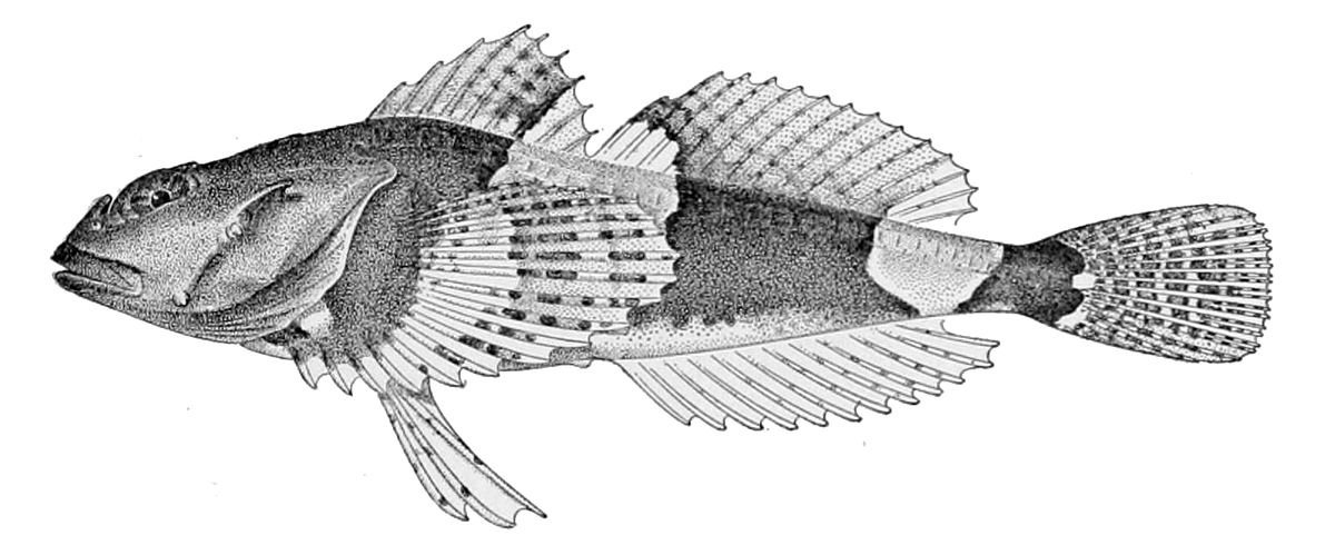 Freshwater Fish Species in Danube River [Central Europe]
