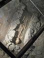 Mikulčice Archaeopark 15.jpg