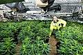 Million pound drugs haul found in Wolverhampton.jpg