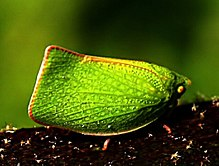 Photo of green-coloured insect on dark tree branch