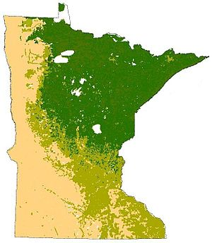 Natural history of Minnesota - The terrestrial biomes of Minnesota, prior to European settlement. Tallgrass aspen parkland/prairie grasslands in yellow, eastern deciduous forest in olive green, and the northern coniferous forest in dark green.