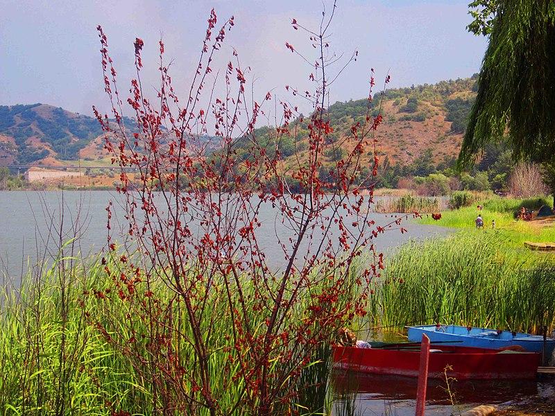 File:Mladost lake , Veles.jpg
