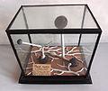 Modell von Mucor mucedo (Köpfchenschimmel) -Osterloh- -Brendel 10e-.jpg
