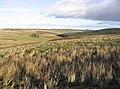 Moorland near Watch Hill - geograph.org.uk - 294282.jpg