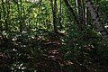 Moscow, Losiny Ostrov forest (31555593626).jpg