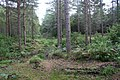 Moss Hill Plantation - geograph.org.uk - 248475.jpg