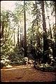 Muir Woods National Monument, California (9f4f6987-c0eb-461a-a671-0a5c4daab4fc).jpg