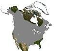 Muskrat North America Range.jpg