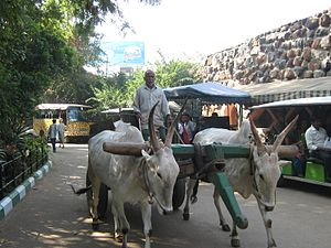 Mysore Zoo - Transportation inside the zoo