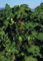 NRCSCA02048 - California (821)(NRCS Photo Gallery).jpg