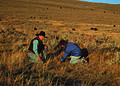 NRCSMT01030 - Montana (4909)(NRCS Photo Gallery).jpg