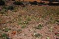 Namaqua NP1.jpg