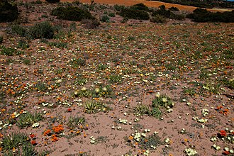 Namaqua National Park - Image: Namaqua NP1