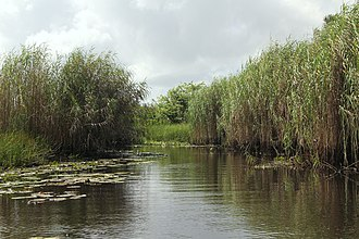 Nariva Plain - The Nariva Swamp on the mouth of the Ortoire river in Trinidad.