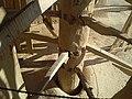 Nashtifan windmill complex CAM001870.jpg