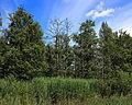 Nationaal Park De Alde Feanen. Locatie, It Wikelslân 022.JPG
