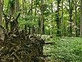 Nationalpark Hainich craulaer Kreuz 2020-06-03 10.jpg