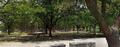 Naturaleza-arboles.png