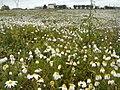 Nature - Natura (15984477483).jpg