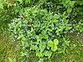 Nature of Latvia DSCF3422 - Flickr - davispuh.jpg