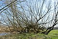 Naturschutzgebiet Haseder Busch - Bungenpfuhl (5).jpg