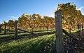 New Zealand - Vineyards - 8968.jpg